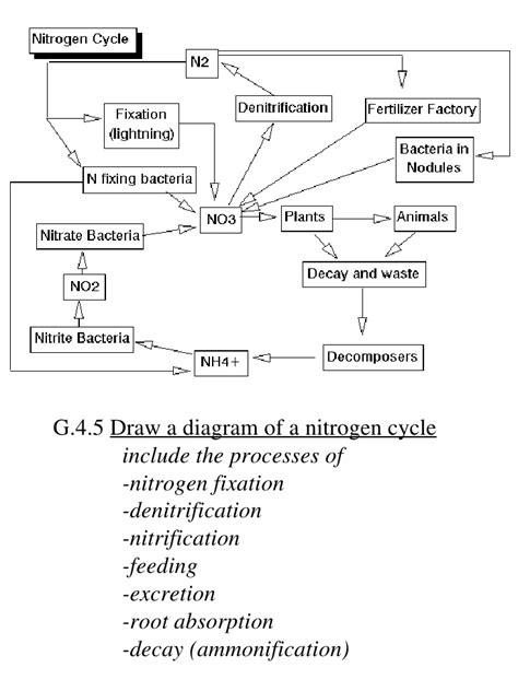 Ib Biology Draw Assessment Statements