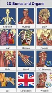 12 Best Anatomy Apps For Android  U0026 Ios
