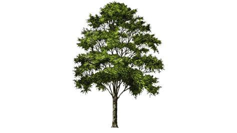 landscape street tree 3d warehouse moodboard