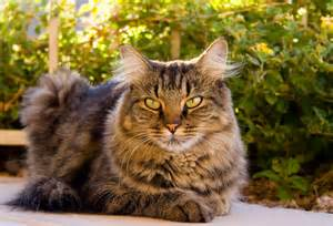 tabby cats research says cats healing powers