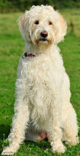 hidden suffering  cross breed dogs bred   cute
