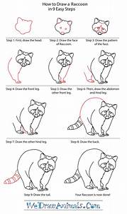 How To Draw A Raccoon Dog
