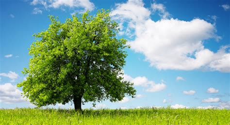 pianta un albero cambiovita expo