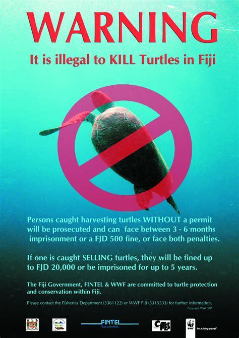 Poster: Turtle warning   WWF