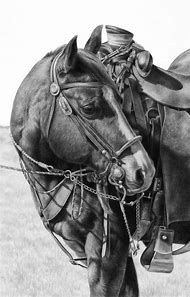 Western Horse Pencil Drawings