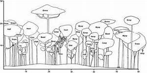 Forest Profile Diagram Of Lowland Rain Forest On A Plain