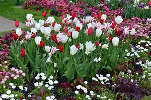 Tulpenzwiebeln Im Frühjahr Pflanzen : blumenzwiebeln richtig pflanzen pflegen und lagern ~ A.2002-acura-tl-radio.info Haus und Dekorationen