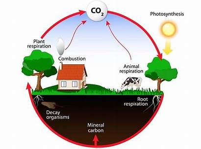 Ecosystem Energy Flow Cycle Carbon Chart Recycled