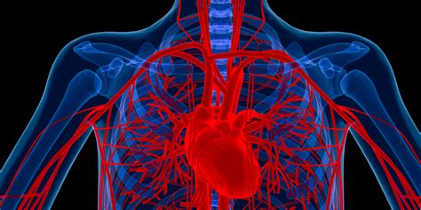 You've Been Diagnosed With An Enlarged Aorta