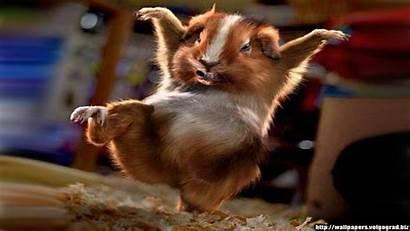 Animal Desktop Wallpapers Background Humor Funny Screensavers
