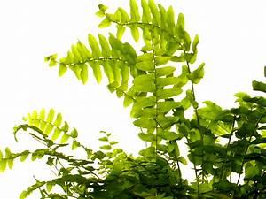 Zimmerpflanzen Feng Shui : die energetische wirkung von zimmerpflanzen ~ Indierocktalk.com Haus und Dekorationen
