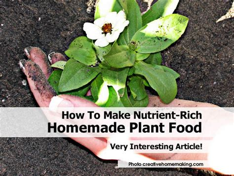 how to make food how to make nutrient rich homemade plant food