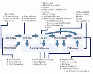 Preclinical Toxicology Software  U2013 Provantis