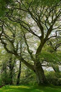 Beautiful Tree Photography Nature