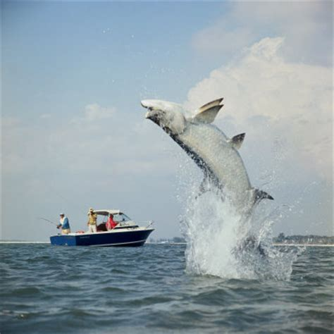 Big Boat Show In Florida by Historical Fishing Photos Florida Go Fishing