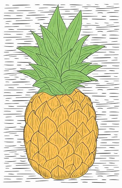 Drawn Hand Illustration Vector Pineapple Doodle Icons