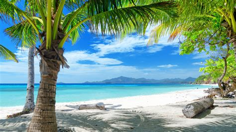 wallpaper summer beach sand palm trees 2560x1600 hd