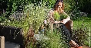 Gräser Für Garten : faszination gr ser veredelung f r garten und balkon ~ Lizthompson.info Haus und Dekorationen