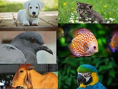 Pets Keeping Vastu Birds Animals Keep Some