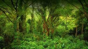 Tropical Rain Forest | San Diego Zoo Animals & Plants