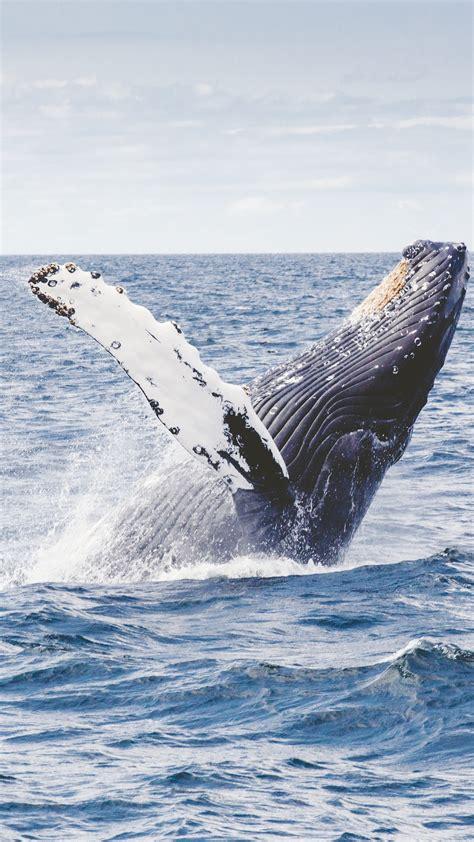 wallpaper whale   wallpaper  ocean nature