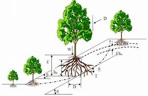 14  Influence Of Vegetation On Slope Stability  Coppin And
