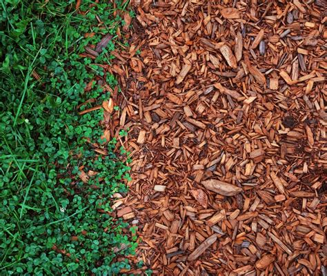 which mulch is best best mulch for your garden jimsmowing com au