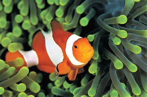 fond d ecran poisson qui bouge fond d 233 cran poisson anim 233 fonds d 233 cran hd
