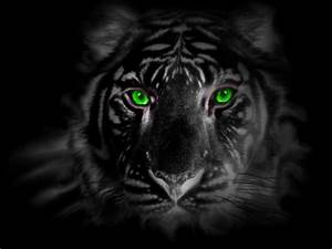 green eye tiger by tigerallied on DeviantArt