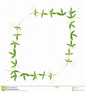 Bilder Mit Weißem Rahmen : sch ner rahmen der gr nniederlassungspassionsblume mit ranken ist stockfoto bild 53588744 ~ Indierocktalk.com Haus und Dekorationen