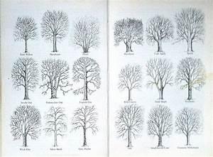 Winter Tree Profiles