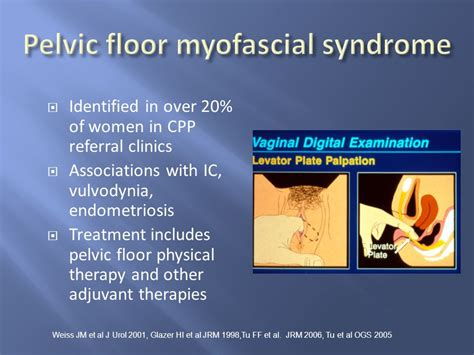 Pelvic Floor Spasms Physical Therapy by Chronic Pelvic C Wang Md Ppt