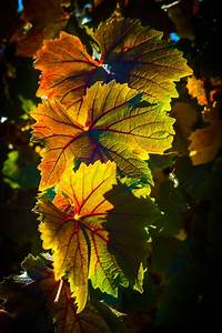 Autumn, Leaves, Pictures, Photos, And, Images, For, Facebook, Tumblr, Pinterest, And, Twitter
