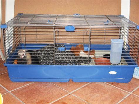 gabbia per furetto furetto 3 mesi ia gabbia annunci palermo animali