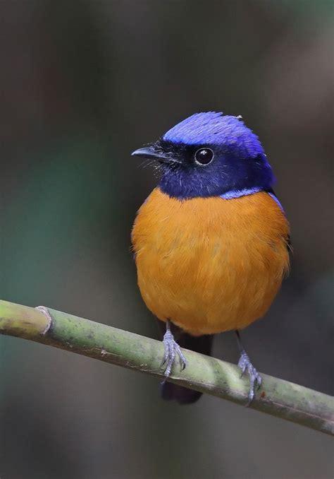 bird colors the 25 best beautiful birds ideas on bird