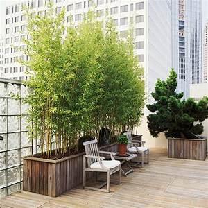 Sichtschutzpflanzen Für Terrasse : dachterrasse und balkon bepflanzen freshouse ~ Indierocktalk.com Haus und Dekorationen
