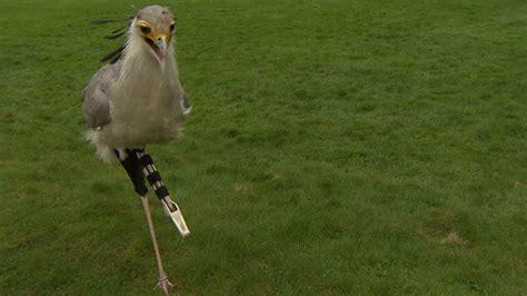 3d bein bein aus dem 3d drucker s 246 ckchens hightech prothese im vogelpark walsrode rtl nord