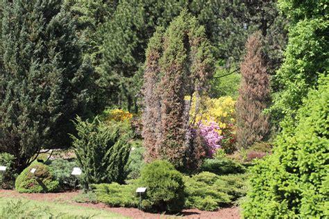 Bēdīga aina botāniskajā dārzā: pavasaris dažus kokus it nemaz nav saudzējis - Jauns.lv