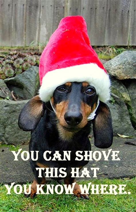 dachshund dogs christmas meme memes dog funny google does impressed hat cute hilarious santa luck better totally costume any via
