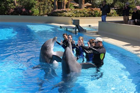 A Day As A Dolphin Trainer