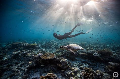 meet the freediving couple who make stunning underwater