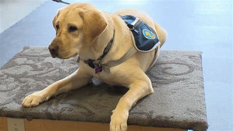 families seeking autism service dogs face years long wait