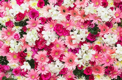 Flower Background Flower Backgrounds 30 Free Jpg Png Psd Ai Vector