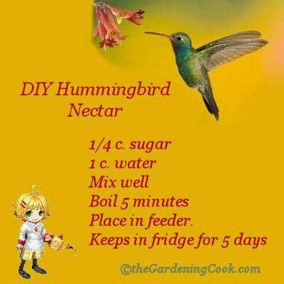 hummingbird nectar birds butterflies trees pinterest