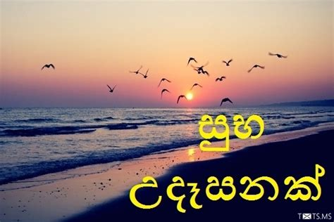 sinhala good morning sms wishes images  facebook whatsapp picture sms txtsms