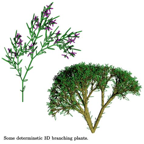 images of plants modeling plants with lindenmayer systems allen pike