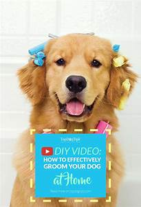 how to groom a dog at home by yourself intro to diy dog With dog grooming at home