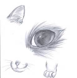 how to draw a realistic cat how to draw a cat by 1pencilburner on deviantart