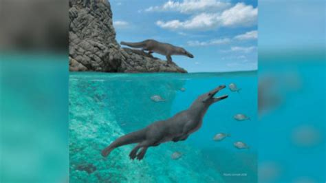 ancient whales walked   legs  moved  giant
