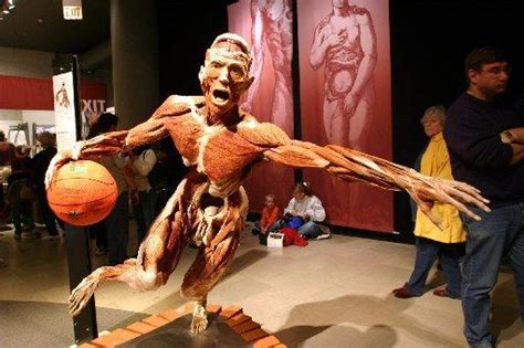 ri  host human corpse exhibit body worlds vital